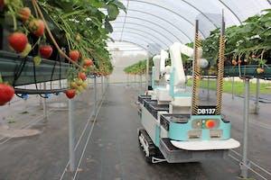 De startup Dogtooth Technologies werkt aan een plukrobot die op tafelhoogte zachtfruit kan plukken.