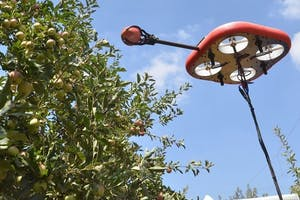 Each drone is equipped with a gentle gripper and several neural networks are responsible for detecting the fruit, for data fusion of the fruit's position and their quality from different angles, fruit targeting, foliage and fruit calculations, ripeness measurements and for calculating the trajectory and manoeuvres through the foliage to the fruit as well as pulling or cutting the fruit from the tree. - Photo: Kubota